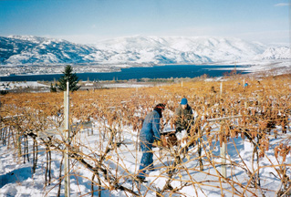 Canadian Icewine Battle Bears Birds Deer and Coyotes