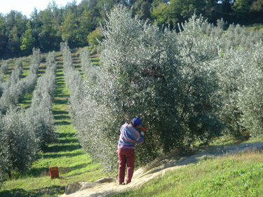 The Etruscan Wine Route