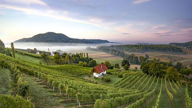 Harvest Report : Austria 2020