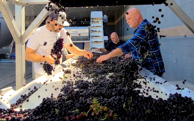 A Year in the Life of a BC Winegrower - Fall