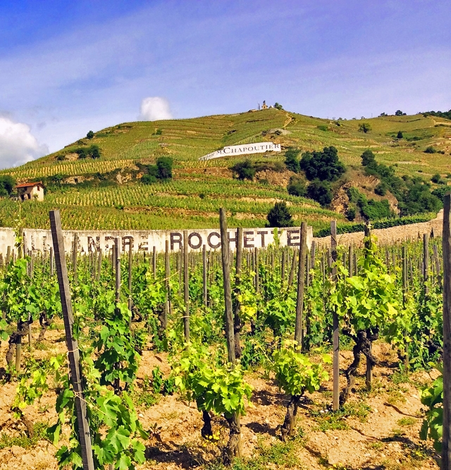 Harvest Report : Rhone Valley 2015