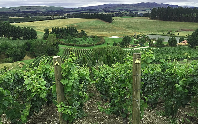 Grapes : NZ Chardonnay