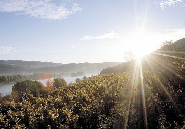 Harvest Report : Austria 2016