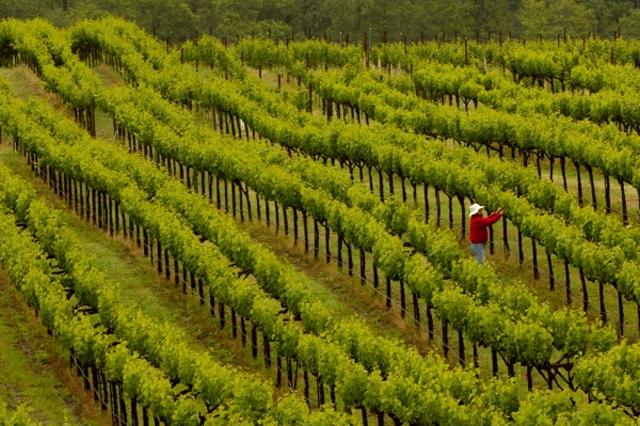 Top Ten New World Cabernet Sauvignon