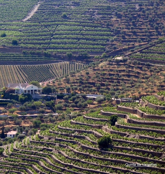 Harvest Report : Douro Valley 2016