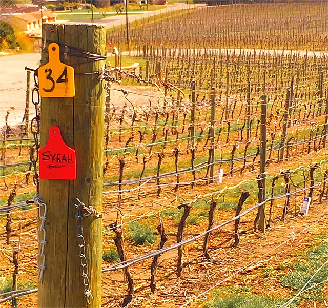 Top Ten BC Wineries at The Nationals