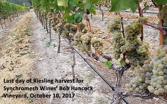 Top 10 : Canadian Riesling