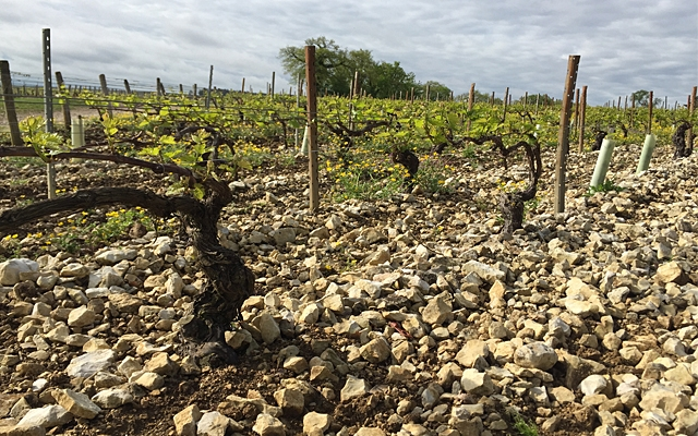 Chablis : Terroir and Climats