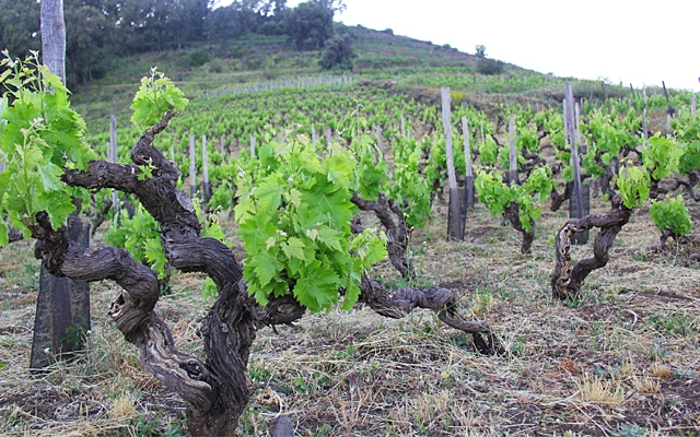 Places : Mount Etna's eruption of wines