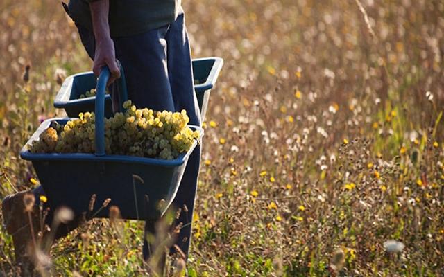 Harvest Report : Bourgogne 2016