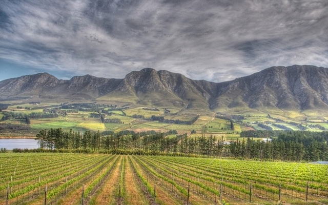 South Africa : Fresh Cape Wine