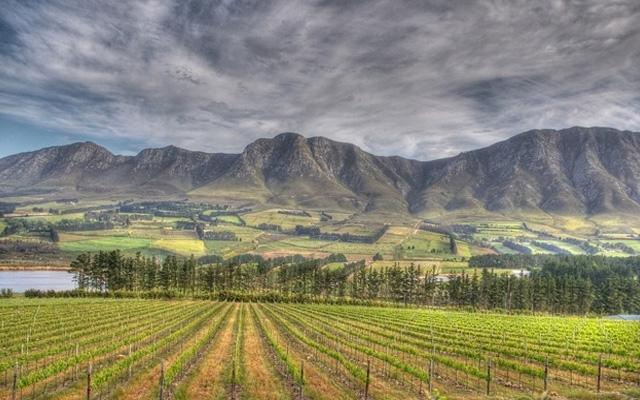 South Africa : Fresh Cape Wine