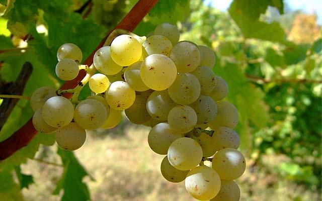 Top 10 : NZ Sauvignon Blanc