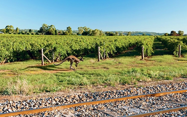 Places : Barossa Valley