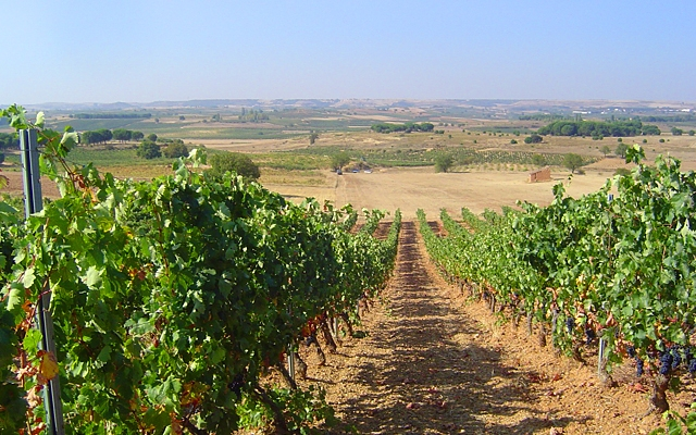 Spotlight Spain : Ribera del Duero