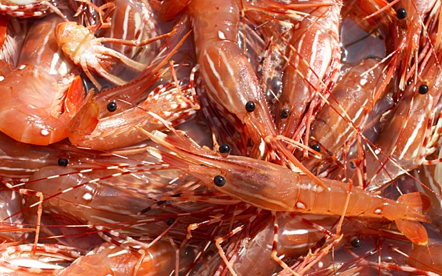 Top 10 : Spot Prawn Picks