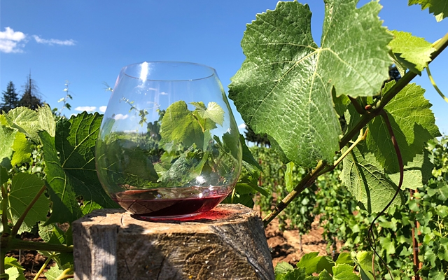 Top 10 : BC Pinot Noir