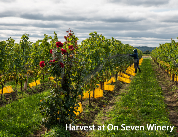 Top 10 : Ontario Chardonnay