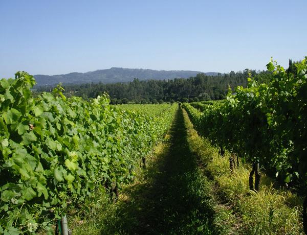 Top 10 : Vinho Verde