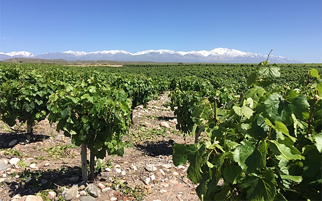 Top Ten : Argentine Malbec