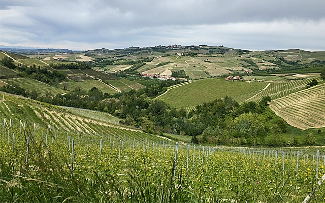 Top 10 : Barolo