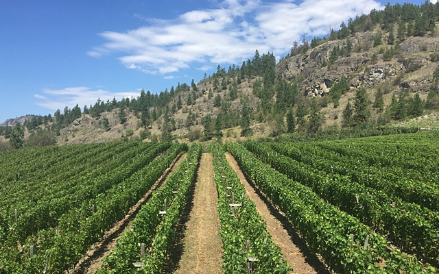 Top 10 : BC's Rarely Seen Grapes