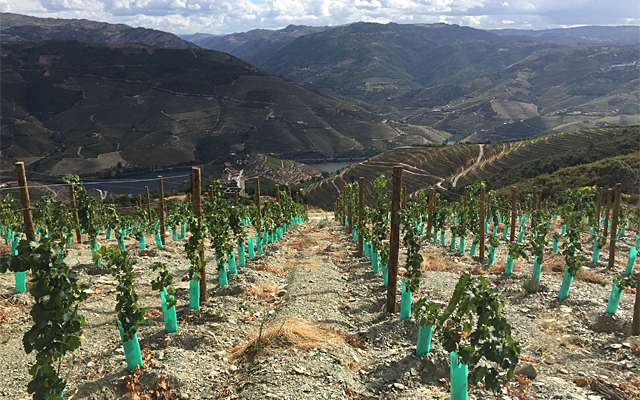 Top 10 : Portuguese White Wines