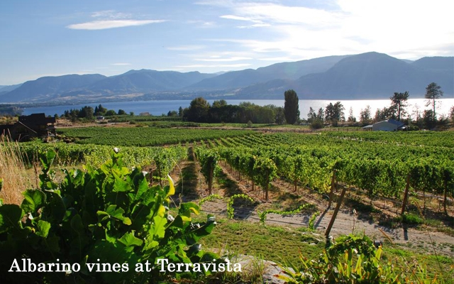 Top 10 : Unique Grapes in BC