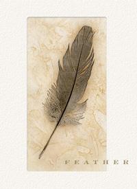 Feather Cabernet Sauvignon