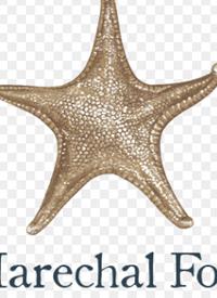 Sea Star Marechal Fochtext
