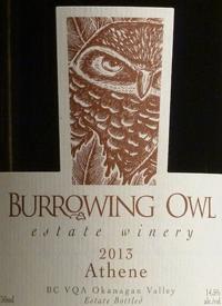 Burrowing Owl Athenetext