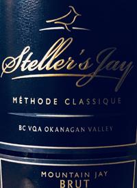 Steller's Jay Mountain Jay Brut Méthode Classiquetext